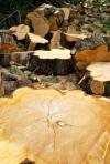 fallen tree logs