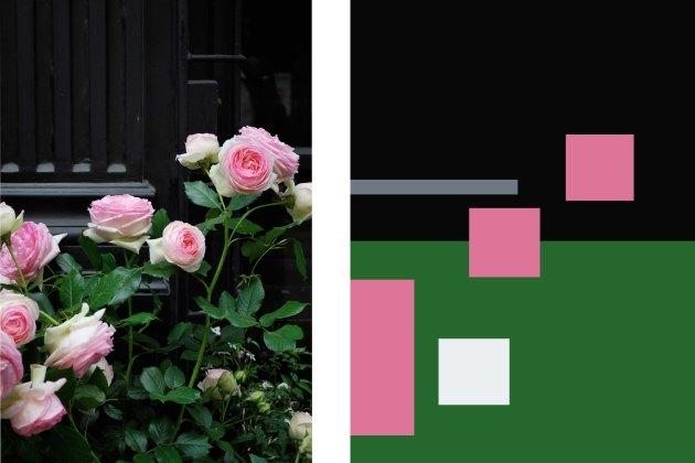 pink roses, deep door
