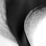 lily curve b&w